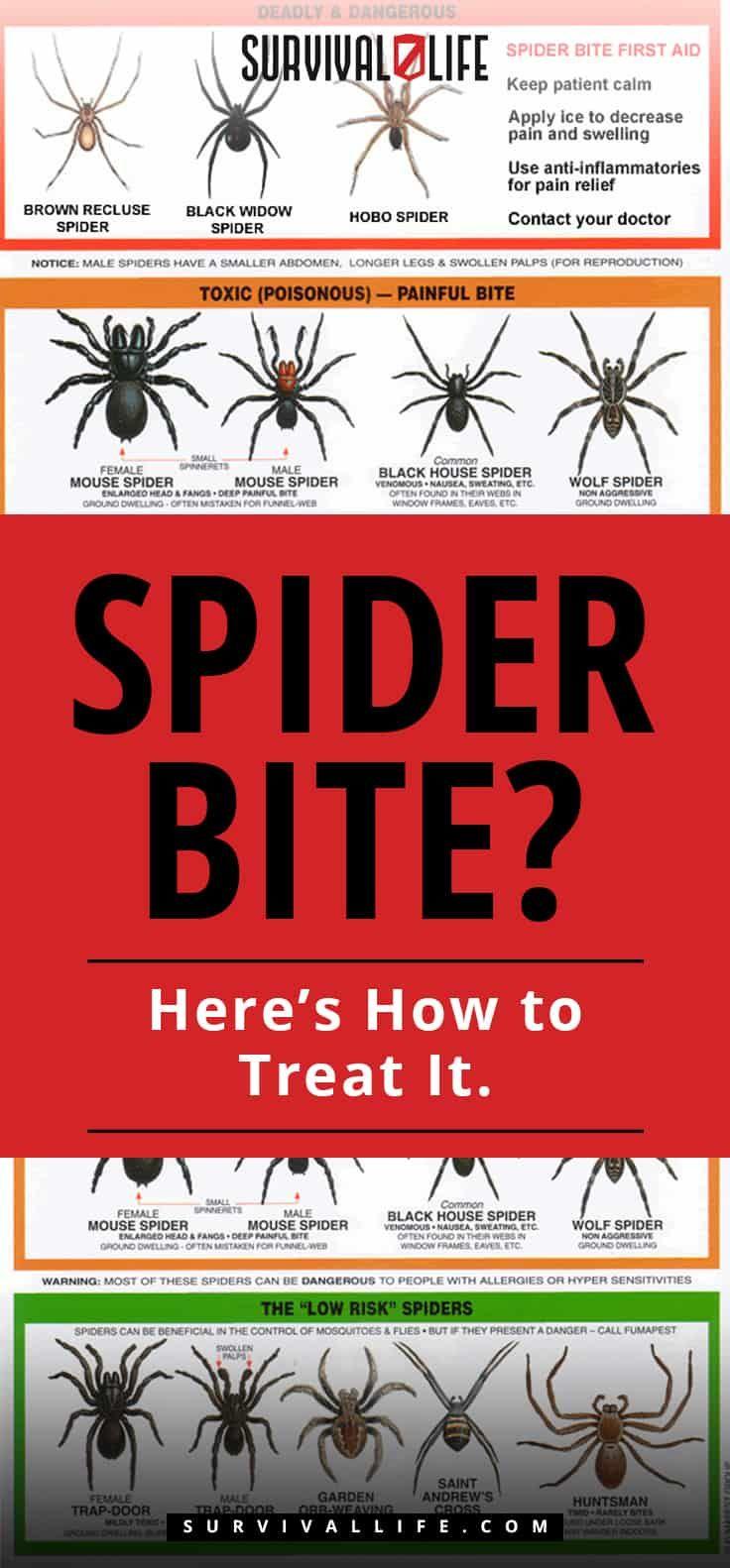 Spider Bite Here S How To Treat It Spider Bites Spider
