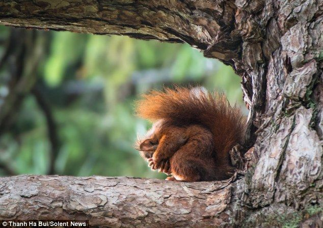 Yoga-t to be kidding me: You might think this is just the squirrel curling up into a ball - but as a matter for fact, he is prepping for his...
