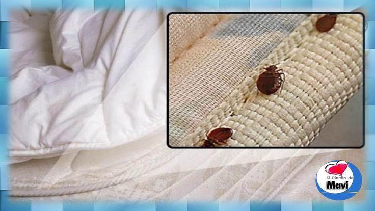 Como eliminar chinches de cama