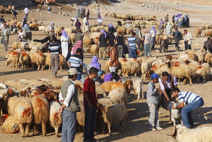 Viehmarkt in der türkischen Provinz Sanliurfa. Vor allem die ländlichen Gebiete im Osten und Südosten der Türkei, in denen vorwiegend Kurden leben, sind wirtschaftlich unterentwickelt und profitieren kaum von der prosperierenden Wirtschaft. Foto: yavuzsar