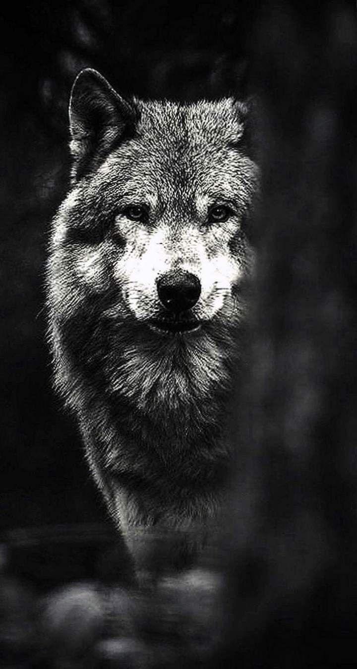 50 Best 4k Dark Iphone Wallpaper 4k In 2020 Wolf Wallpaper Iphone Wallpaper Wolf Eagle Wallpaper