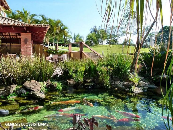 2952 Best Natural Swimming Pools Ponds And Water Stuff