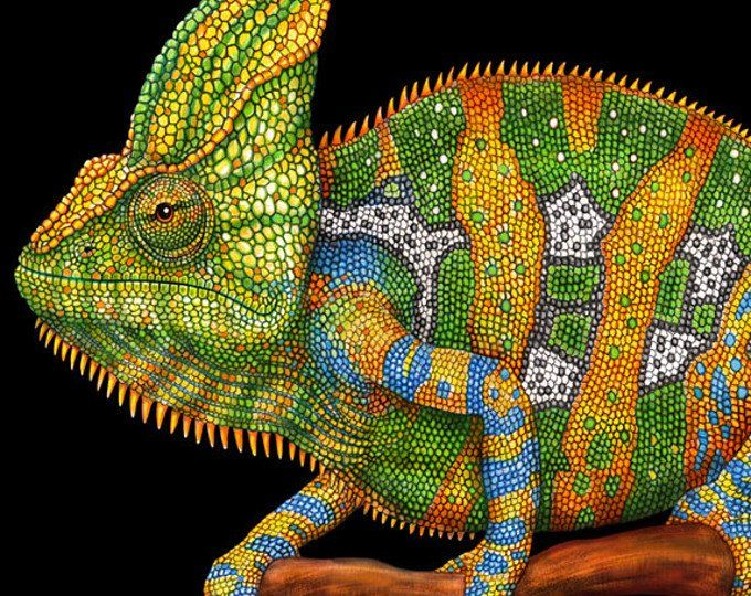 Panther Chameleon Colored Pencil Drawing Mixed Media Artwork