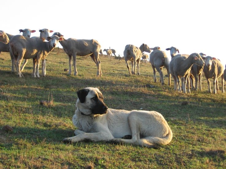 The Biggest Dogs in the World | DogVacay Official Blog