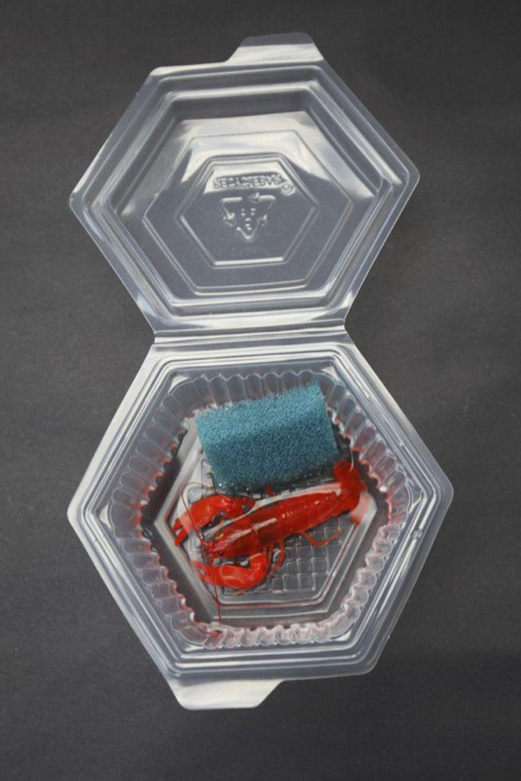 Nano-Aquarium für Anfänger: Flusskrebse sicher versenden