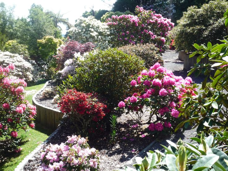 Waipahihi Botanical Reserve is a beautiful garden filled with rhododendrons…