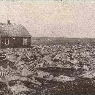The Dust Bowl. The animals died, they could not breathe with no shelter the dust filling their lungs.