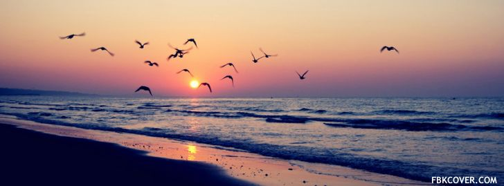 Sunset Birds Facebook Covers - Facebook Covers Photos, Timeline Covers, Create your Facebook cover and upload directly