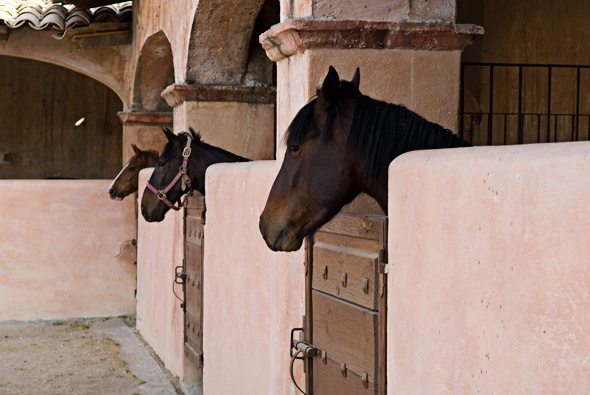 Horse Stables Spanish Style Barns And Horse Facilities Math Wallpaper Golden Find Free HD for Desktop [pastnedes.tk]
