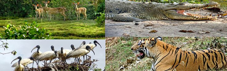 Gharials (Alligators) and the pond of Padmatala Sanctuary Park where the whole wildlife gathers by evening hours are two main attractions in Orissa.