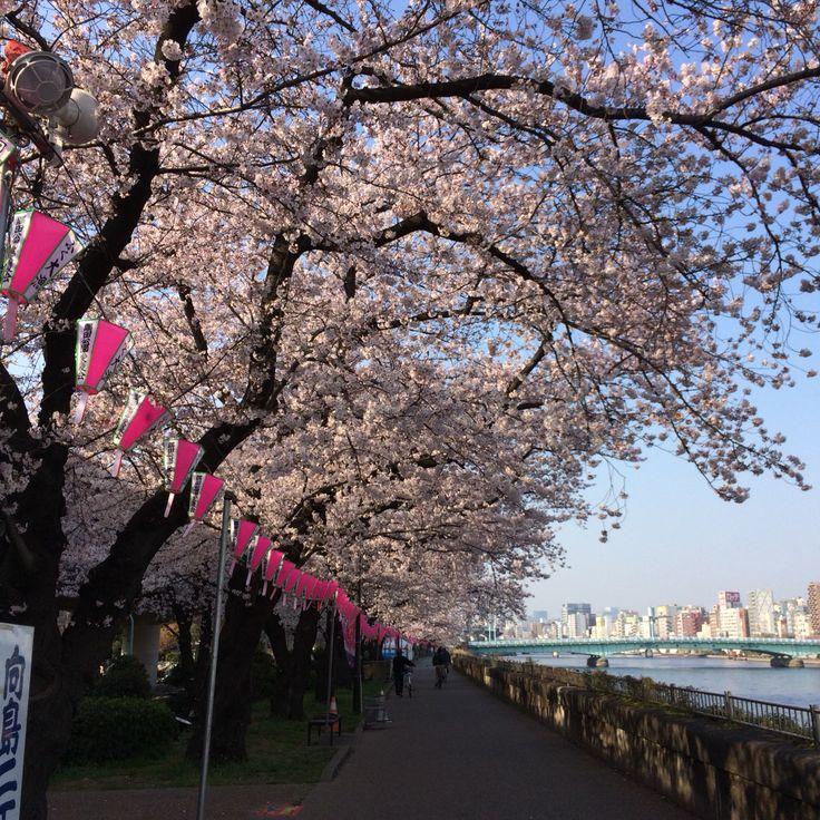 隅田川沿い♪
