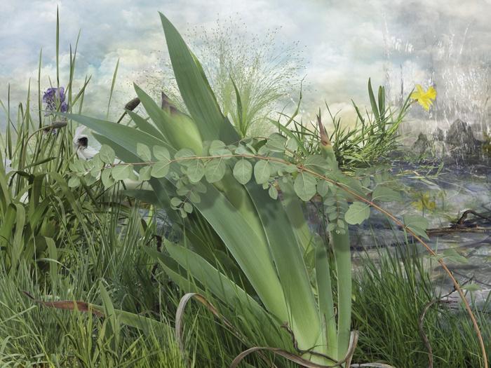 Fotografía nº 5 de la serie 'Alegría en el jardín'. 2011
