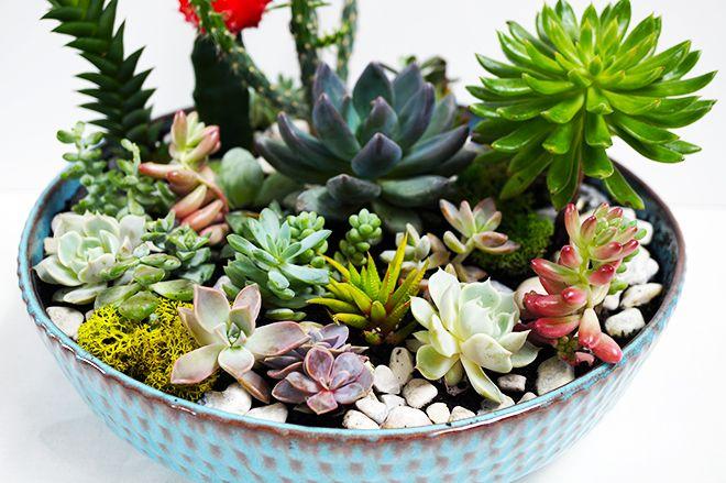 DIY Succulent Garden - Quinn Cooper Style