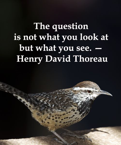 "CACTUS WREN IN ARIZONA -- ""The question is not what you look at but what you see.""  Thoreau -- Enjoy nature quotes at http://www.examiner.com/article/twelve-essential-nature-quotations"
