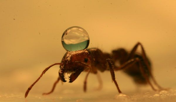Secrets of Fire Ant Rafts Explained | Insects & Engineering | LiveScience