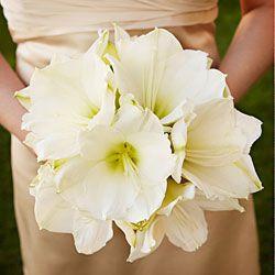 39 best christmas wedding images on pinterest for Bouquet amaryllis