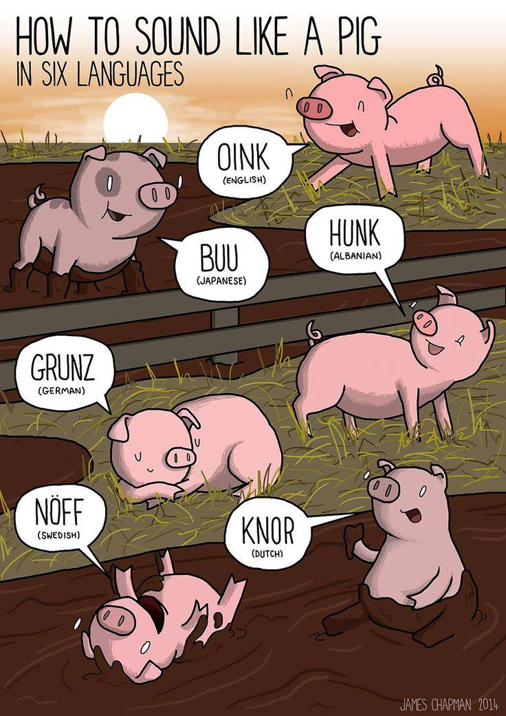 Sound Like A Pig  In Different Languages   www.ghantagiri.com #ghantagiri