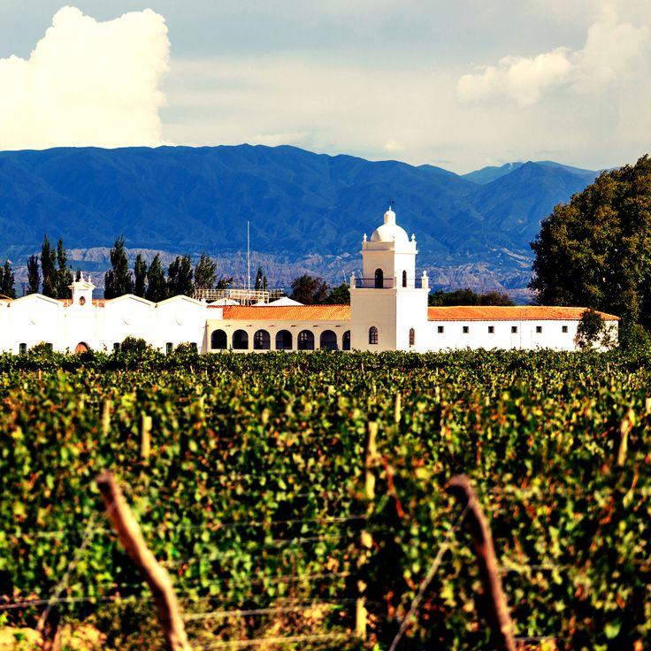El cerro Aconcagua, la cumbre más alta del hemisferio occidental, domina esta tranquila capital, que comparte nombre con la provincia de Cuyo, en la que reside. #mendoza #argentina #wine #amazing #instatravel #nature #roadtrip #sunny #travel #travelgram