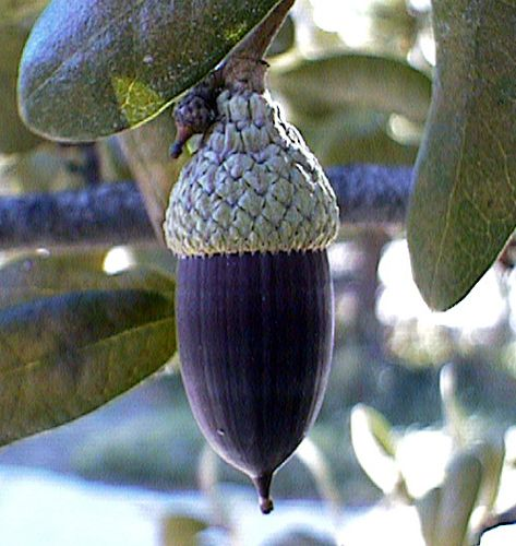 566 best images about seed pods on pinterest trees weed for Garden pods to live in