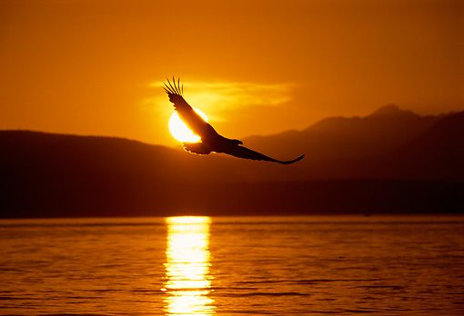EAGLES Recognize that Life's Journey has Storms.  The Lesson is that They Learn to Rise Above Them! #Resilient