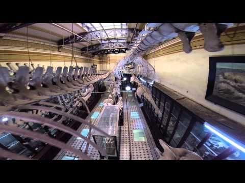 Museo de Ciencias Naturales de La Plata -Desde un Drone Ciudad de La Plata desde el Aire - YouTube