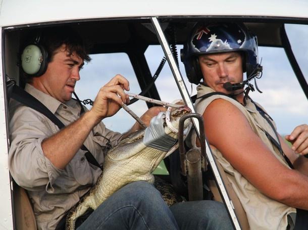 Outback Wrangler: Croc Swarm Pictures | Nat Geo Wild