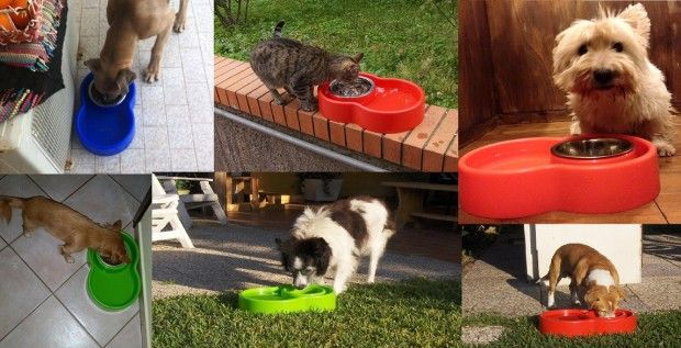 Our ingenious no-ants bowl system is the smartest, cleanest and beautiful bowl for your cats & dogs | Crowdfunding is a democratic way to support the fundraising needs of your community. Make a contribution today!