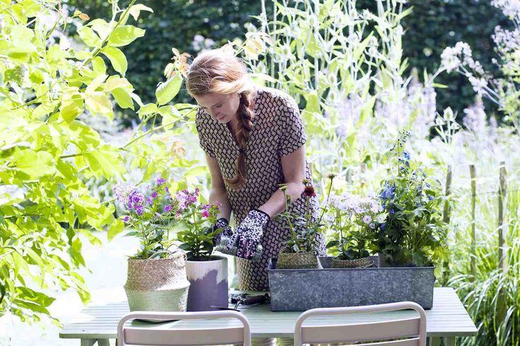 HONSELERSDIJK - Wie wil genieten van een boeket met zomerbloemen uit eigen tuin hoeft maar heel even de handen uit de mouwen te steken. Plant de vlambloem, zonnehoed en ridderspoor in de tuin en klaar! Deze vaste tuinplanten trakteren elke zomer weer op kleurrijke bloemen. En… je kunt deze ook plukken voor een boeket