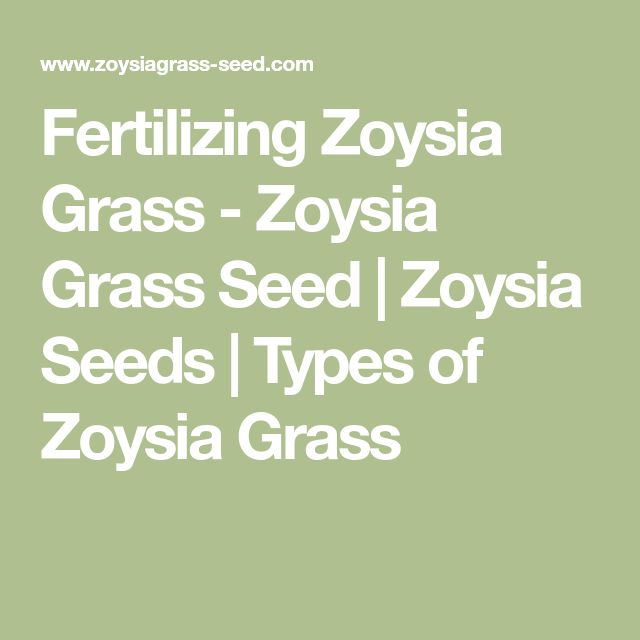 Fertilizing Zoysia Grass - Zoysia Grass Seed | Zoysia Seeds | Types of Zoysia Grass