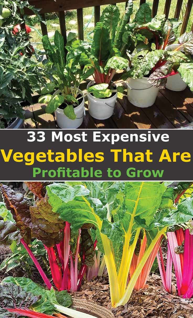 33 High Value Vegetables That Are Profitable To Grow Easy Vegetables To Grow Organic Vegetable Garden Growing Vegetables Urban backyard farming for profit