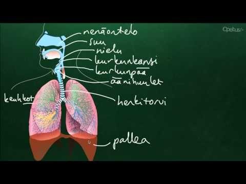 Hengitys (yläkoulu) - YouTube