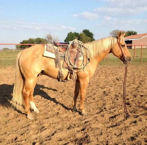 Finshed and Seasoned Ranch and Rope Horse for Sale - For more information click on the image or see ad # 38215 on www.RanchWorldAds.com