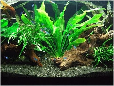 fish aquarium decoration ideas
