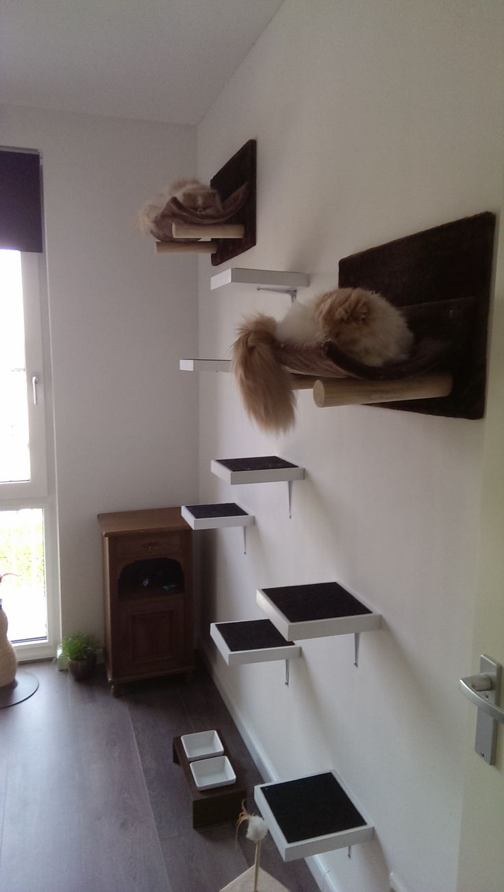 Mijn kattenkamer #cats #catstairs #catwall #catroom #kattenkamer
