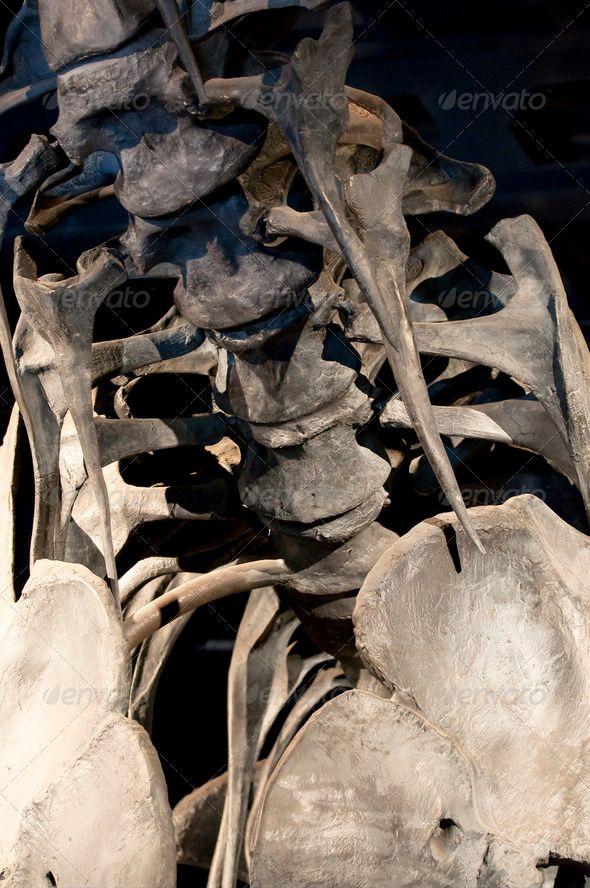 Best 25+ Skeleton template ideas on Pinterest   Skeleton ...