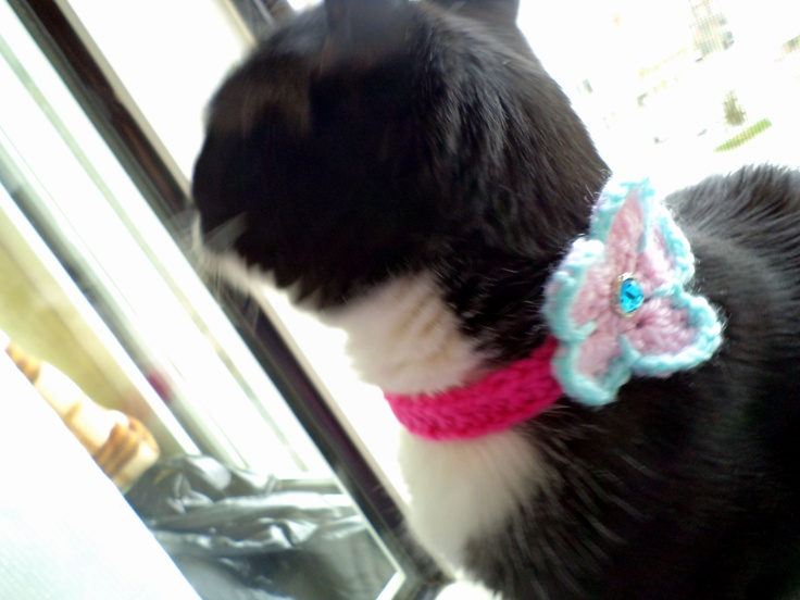 My sweet cat's crochet collar..