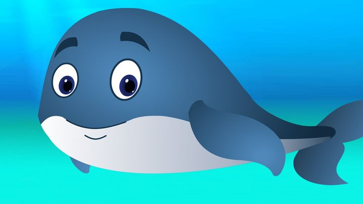 1000+ ideas about Blue Whale on Pinterest | Whales ...