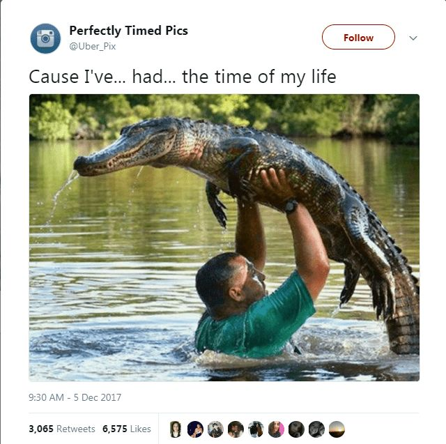 Here Are The 50 Funniest Animal Tweets Of 2017