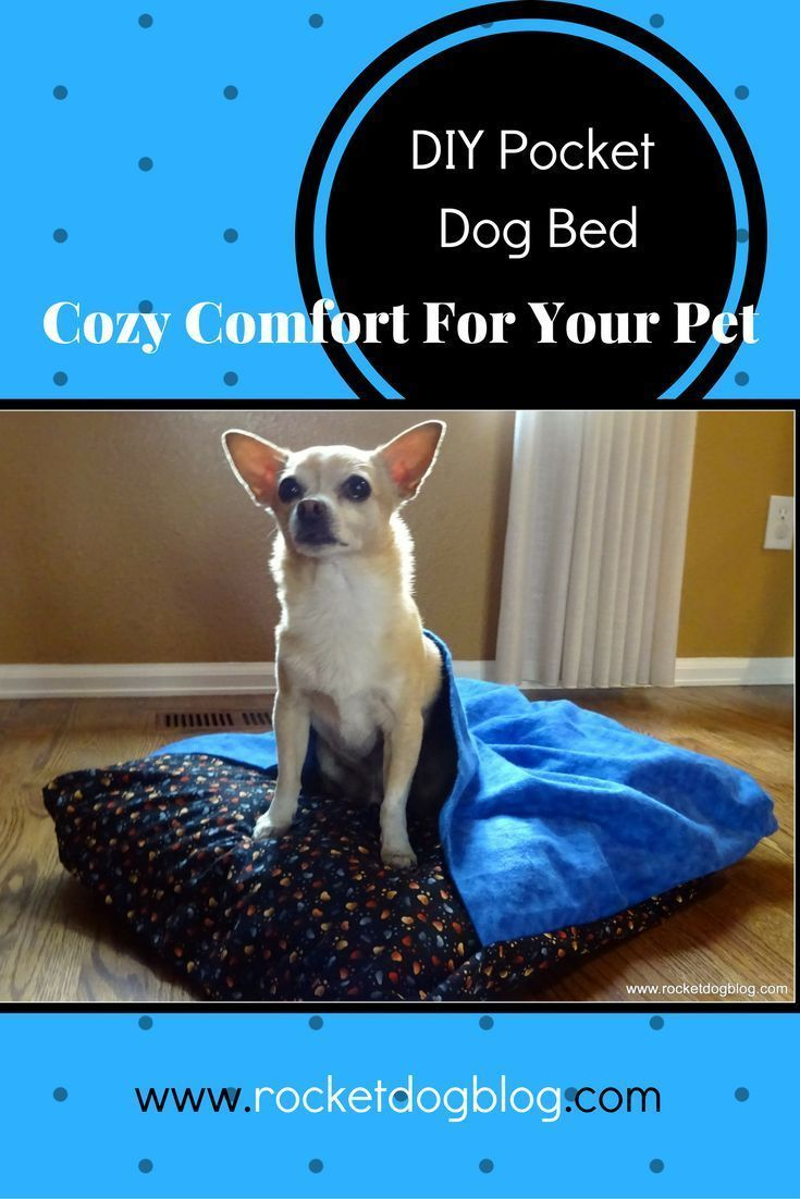 My Husband And I Built This Bed W Built In Dog Kennel Underneath S Diy Bunk Bed Dog Crate Furniture Crate Furniture Diy