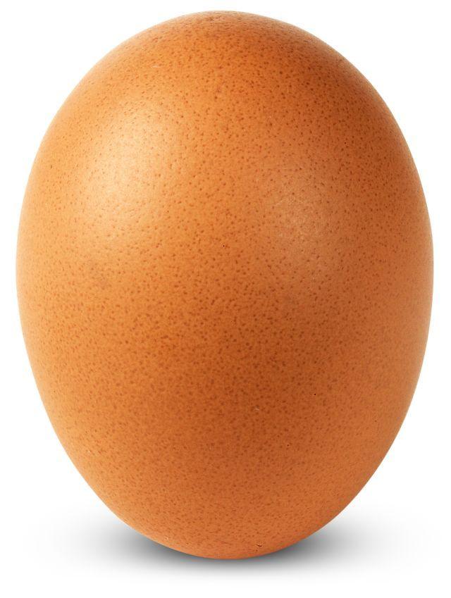 Eggs Development Coloring Pages