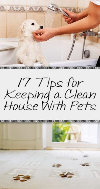 1000 Ideas About Remove Pet Hair On Pinterest Urine