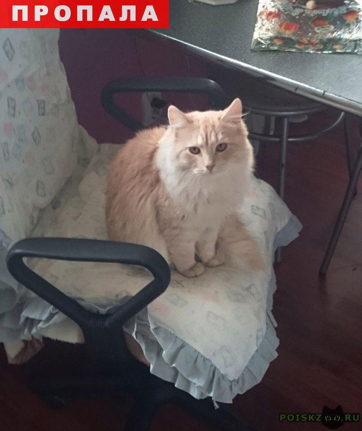 Пропал котик просьба откликнуться г.Санкт-Петербург http://poiskzoo.ru/board/read27501.html  POISKZOO.RU/27501 Потерялся котенька! Цвет такой персиковый, пушистый, глаза коричневые, очень симпатичный! Выскочил из дома по адресу Калининский район, ул. Бутлерова .., кв. ... Просьба, если кто-то нашел его или видел, сообщить по телефону - ...! Пожалуйста!   РЕПОСТ! @POISKZOO2 #POISKZOO.RU #Пропала #кошка #Пропала_кошка #ПропалаКошка #Санкт #Петербург #СанктПетербург #СПБ #Санкт_Петербург
