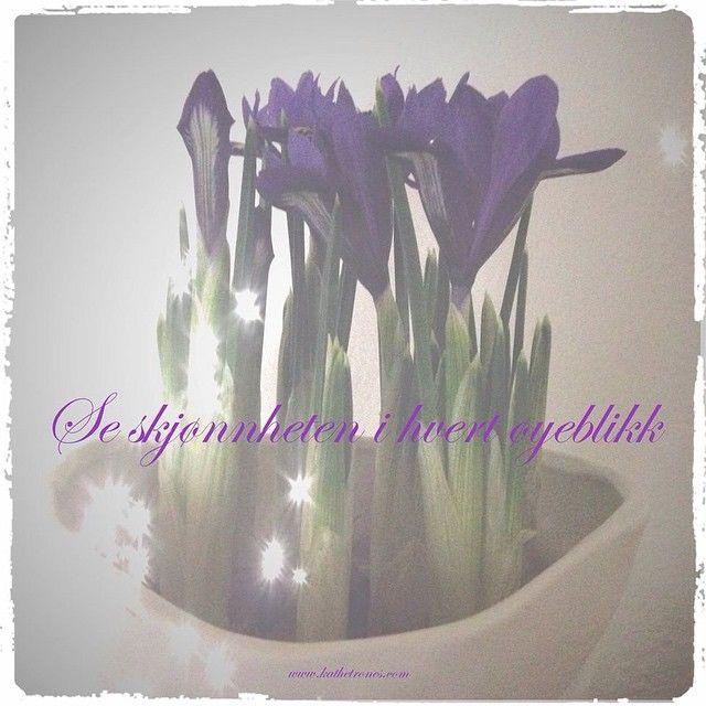 """""""See the beauty in every moment  #healing #love #light #lys #kjærlighet #blomster #flowers #flowersarehealing #norway #blomstererhealing #skjønnhet #iris…"""""""