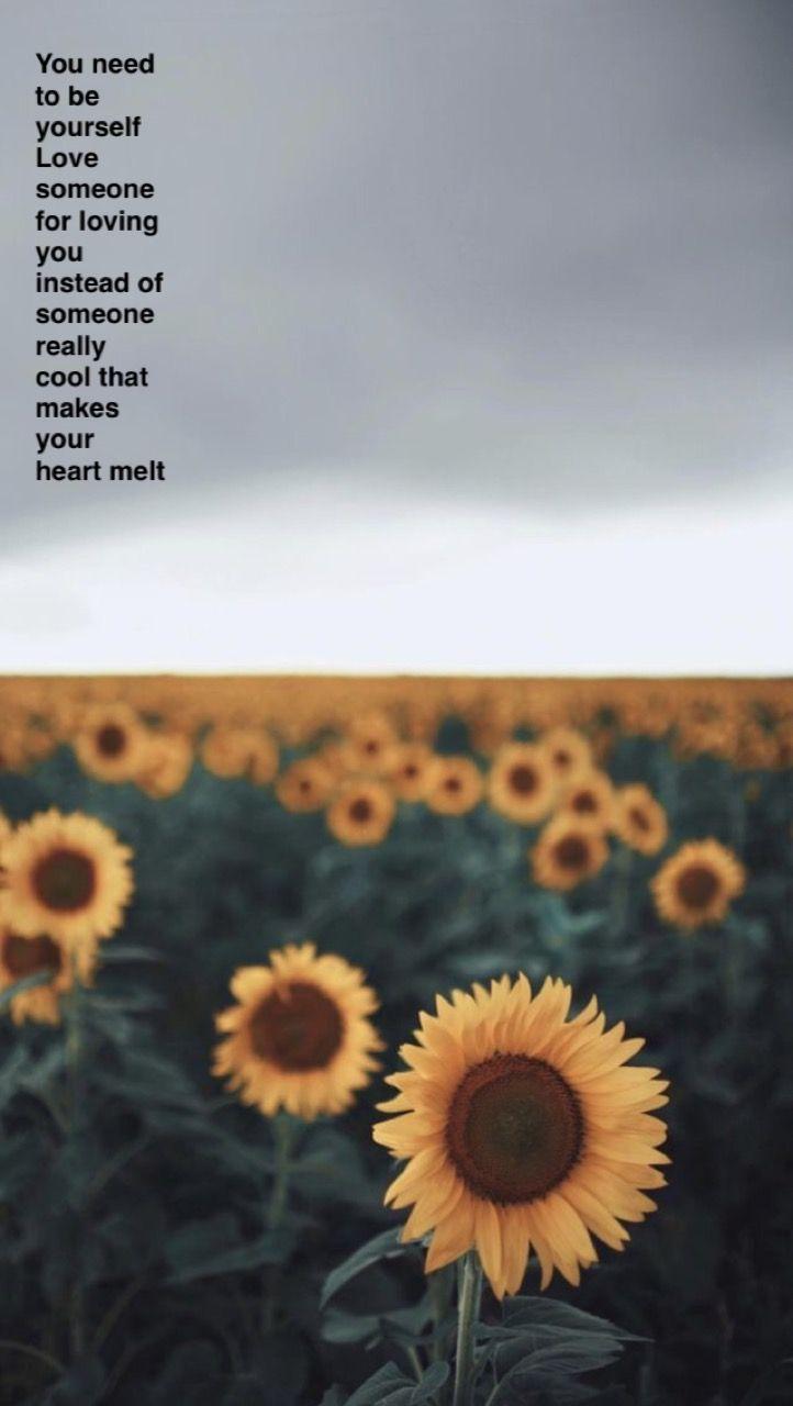 Rex Orange County Lyrics Best Friend Aesthetic Wallpaper