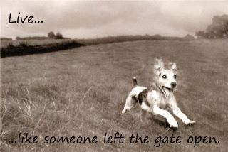 nothing should hold you back: Gate Open, Life, Dogs, Inspiration, Quotes, Things, Gates, Animal