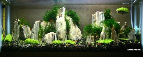 49 best images about aquascapes octopus gardens on pinterest fish tanks forests and - Aquascape design ...