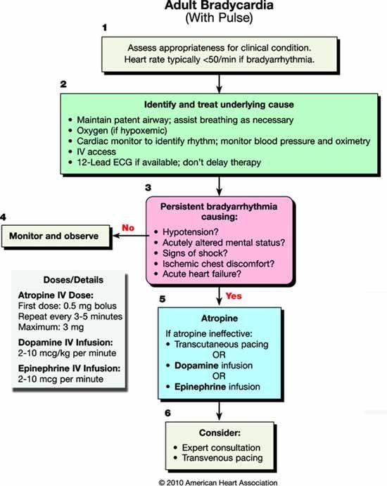 ACLS 2010 - Adult Bradycardia