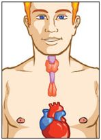 Too much or too little hormone production from the thyroid gland can result in a myopathy (muscle disease).