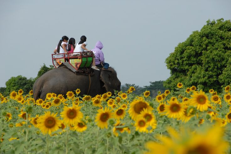 5 unforgettable experiences in Thailand - Travel stories and experiences shared openly.