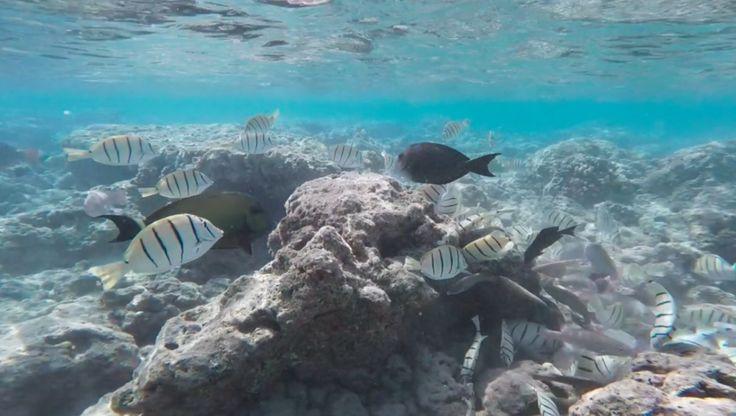 Underwater snorkelling Hanauma Bay in Oahu.